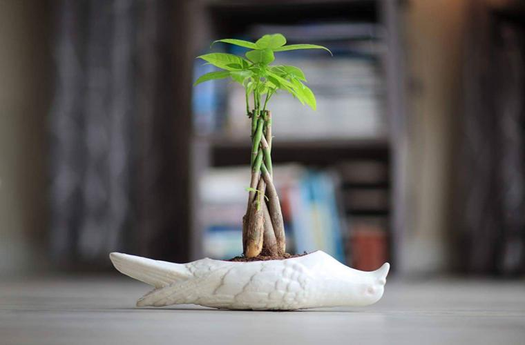 "Artwork ""Pigeon Planter"" by Eric Pawloski"