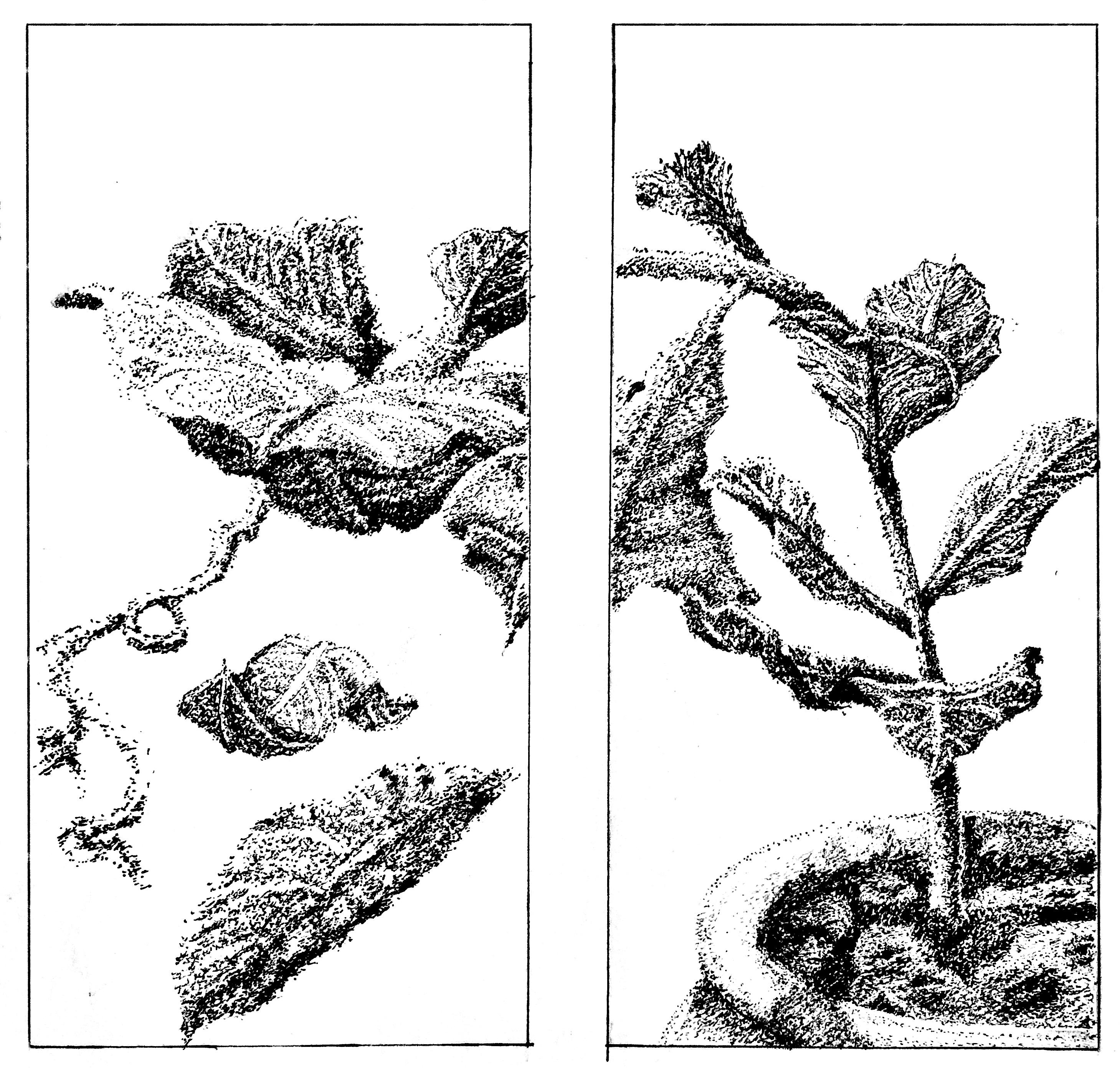 Mahmoud - Wilting Foliage